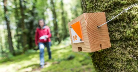Une personne en train de rechercher une balise du parcours d'orientation en forêt de Toulfouen à Quimperlé